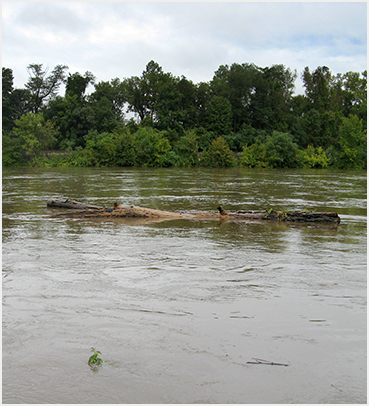 Tree trunk in river.